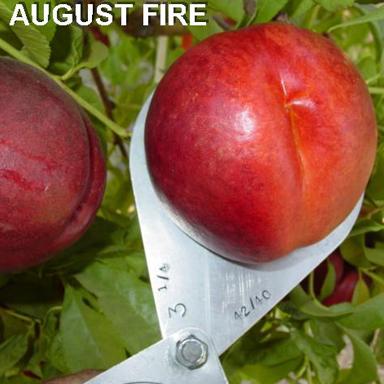 http://bradfordfarms.com.au/wp-content/uploads/2017/08/AUGFIRE-3.jpg